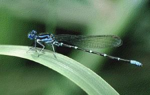 wetlandkeepers course image 2