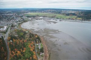 Courtenay-River-Estuary-from-south-of-Millard-Piercy_sm