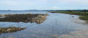 salt marsh island