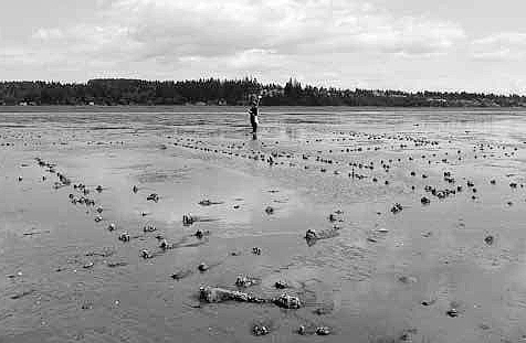 The remains of a large-scale First Nations fishery at low tide.