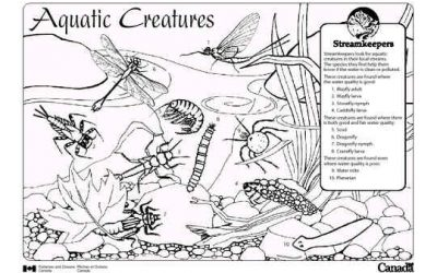 Aquatic Macroinvertebrates Resource Guide