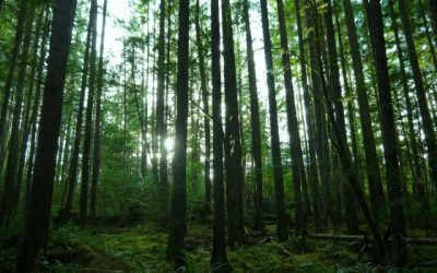 Cumberland Community Forest Walks