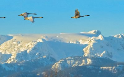 Climate Change and Blue Carbon in the Comox Valley