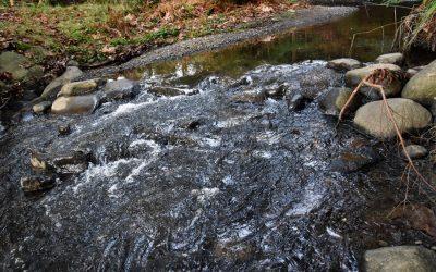 Brooklyn Creek Watershed