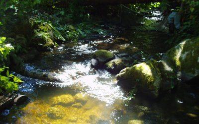 Millard Piercy Watershed
