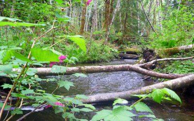 Morrison Creek Watershed