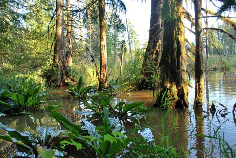 Perseverance Creek
