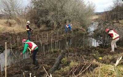 Project Watershed Continues Restoration Work Along Mallard Creek