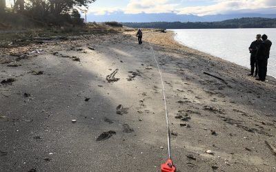 Forage Fish Project Needs Volunteers