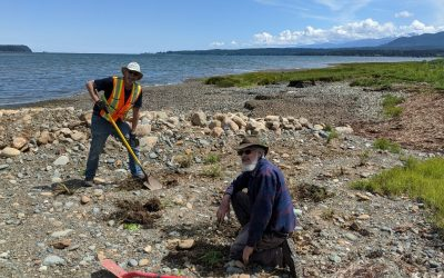 Coastline Restoration in Fanny Bay