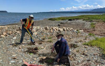 Coastline Restoration in Fanny Bay