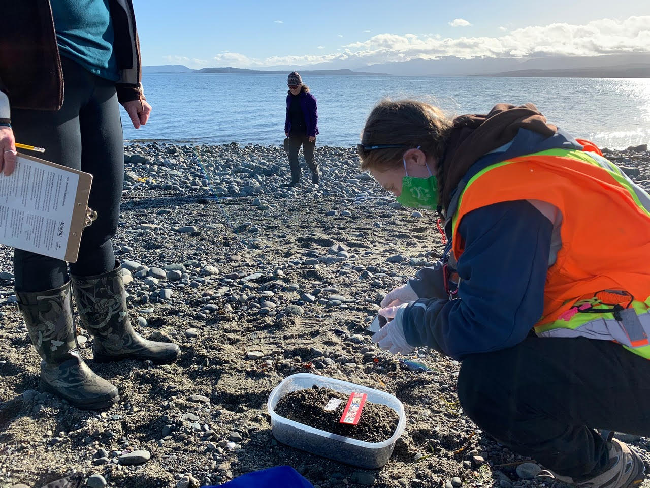 Tree Island Forage Fish Study