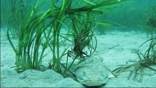 Project Watershed Plans for Spring Eelgrass Transplants